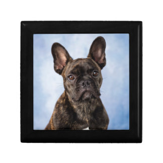 The French Bulldog Gift Box