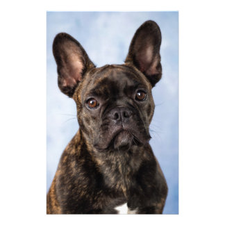 The French Bulldog Stationery