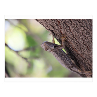 The Friendly Lizard Postcard