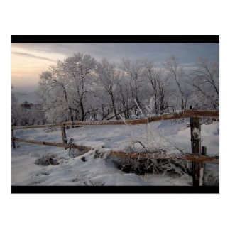 The Frozen North Postcard