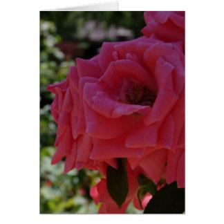The Garden Card