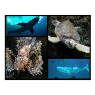 The Georgia Aquarium Collage Postcard