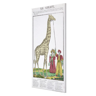 The Giraffe Presented to the King Canvas Print