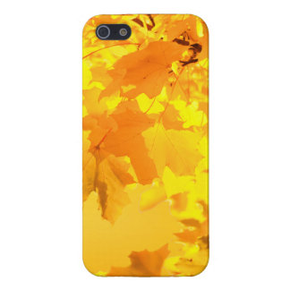 The Gold of Autumn iPhone 5/5S Cases