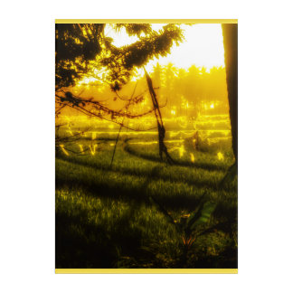 The Golden Glow of Late Afternoon on Balinese Rice Acrylic Wall Art