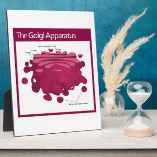 The Golgi apparatus Golgi complex Diagram Display Plaque