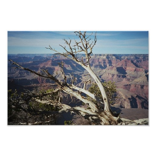 The Grand Canyon, South Rim Posters