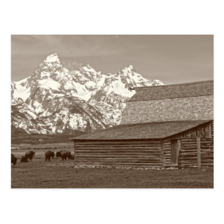 The Grand Tetons from Mormon Row Postcard