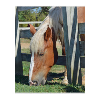 The Grass Is Greener On The Other Side Horse Acrylic Wall Art