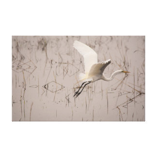 The Great Egret Take Off 39 x 25 Wrapped Canvas