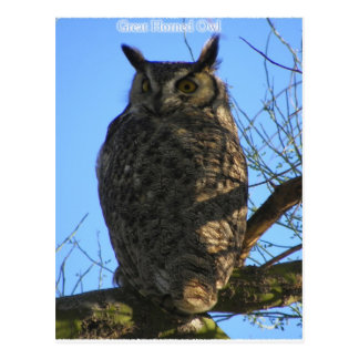 The Great Horned Owl Postcard