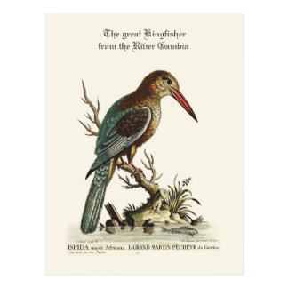 The great Kingfisher from the River Gambia Postcard