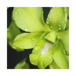 The Green Orchid Canvas Print