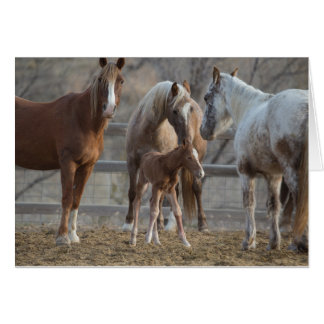 The Greeting: Galloping to Freedom Greeting Card