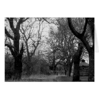 The Grove in Winter - greetings card pack