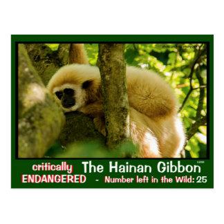The Hainan Gibbon is endangered: < 25 left ~~ Postcard