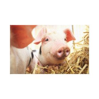 the happy pig canvas print