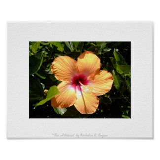 """""""The Hibiscus,"""" Floral Photo Poster"""