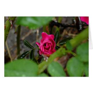 The Hidden Jewel (rose hips) - Customized Greeting Card