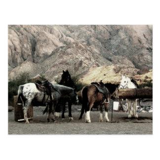 the Horses Postcard