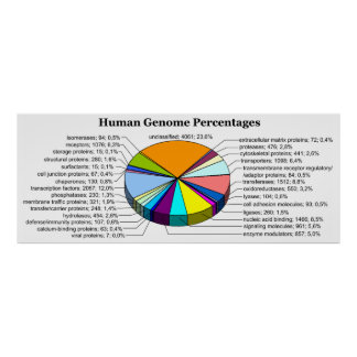The Human Genome with Number and Percent of Each Poster