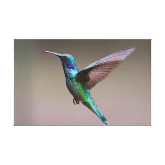 The Hummingbird. Canvas Print