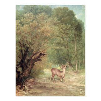The Hunted Roe-Deer on the alert, Spring, 1867 Postcard