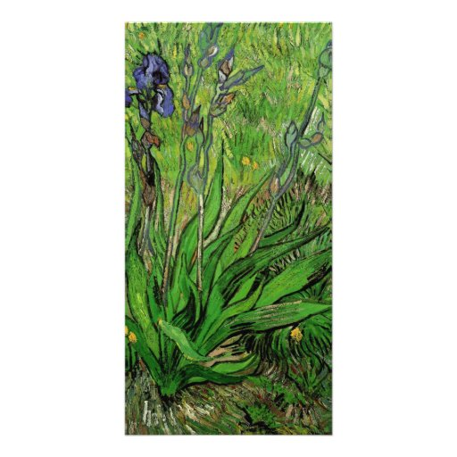 The Iris by Vincent van Gogh Picture Card