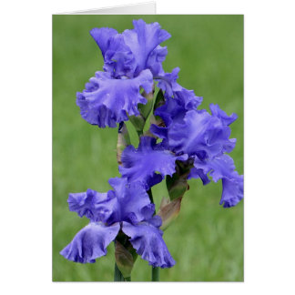 The Iris Lady Note Cards