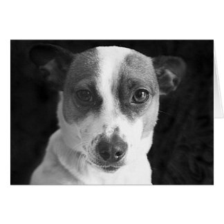 The Jack Russell Stare Card