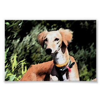 The Jinji Saluki Poster