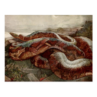 The Jungle Book: Kaa, the Python Postcard
