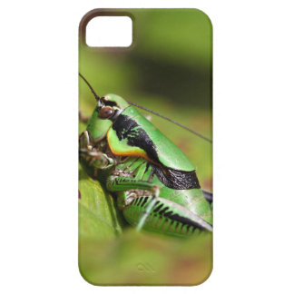 The katydid cricket Eupholidoptera chabrieri iPhone 5 Covers