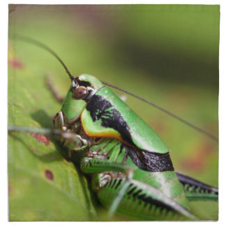 The katydid cricket Eupholidoptera chabrieri Napkin