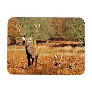 The King's Deer, red deer stags 2 Rectangular Photo Magnet