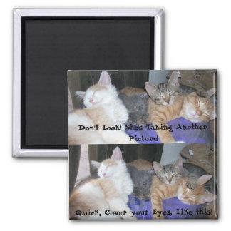 The Kittens -aka The Boys - funny pics Square Magnet