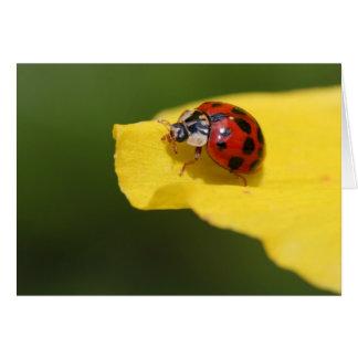 The Ladybug Card