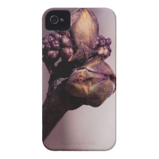 The Lilac Bud iPhone 4 Case