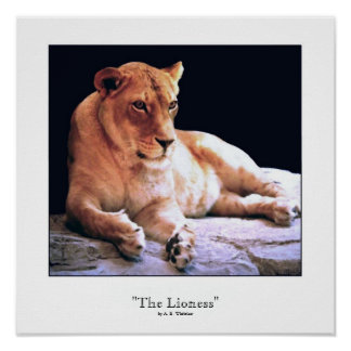 """""""The Lioness"""" Poster"""