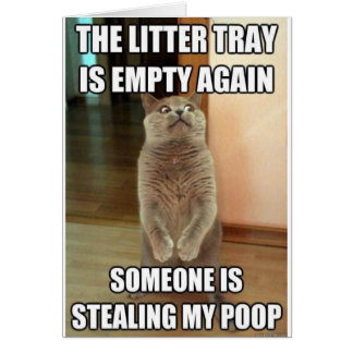 The litter tray is empty again card