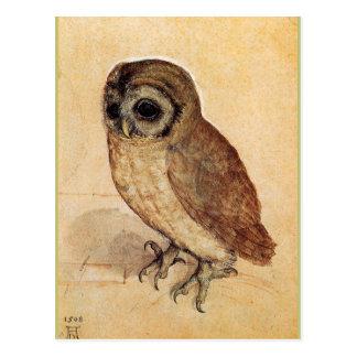 The Little Owl by Albrecht Durer Postcard