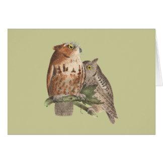 The Little Screech Owl(Bubo asio) Card