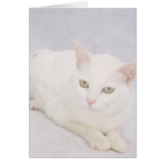 The Little White Cat Greeting Card