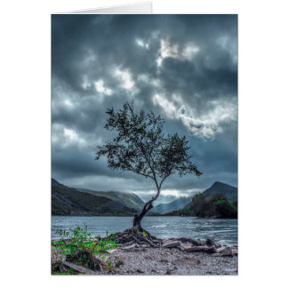 The Lone Tree Card