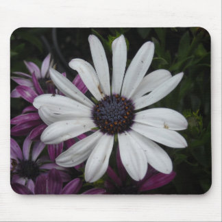 The Lone White Daisy Mouse Pad