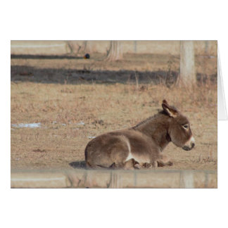 The Lonely Donkey Card