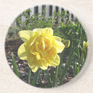 The Lovely Daffodil Coaster
