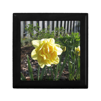 The Lovely Daffodil Gift Box