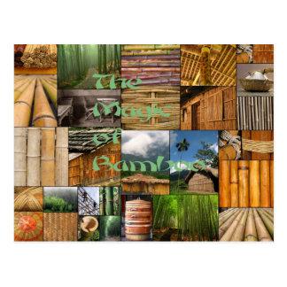The Magic of Bamboo Postcard