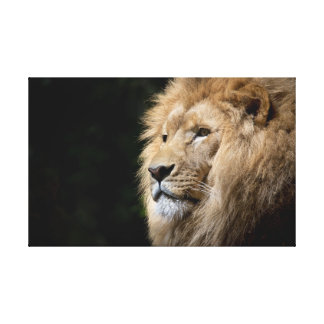 The Magnificent Lion. Canvas Print